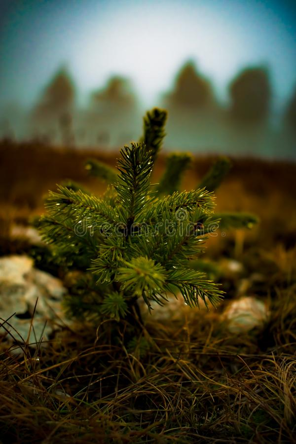 Focus on a small,wet tree. stock photos