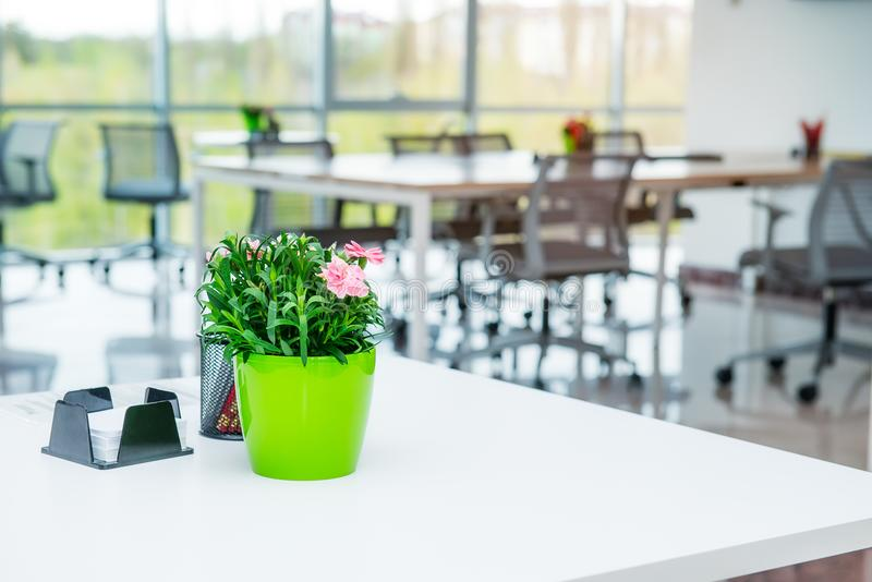 Focused flower pot on the table with blurred interior background of interior of open work space office with desks, chairs and gree royalty free stock image
