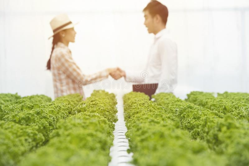 Focused on green oak organic vegetable farm with blurred of businessman hand check with asian farmer gardener woman in background,. Focused on green oak organic stock photos
