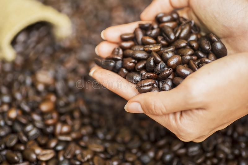 Focused view of a grasp of coffee beans. From the little sack, shrouded by handful of other coffee beans royalty free stock photos