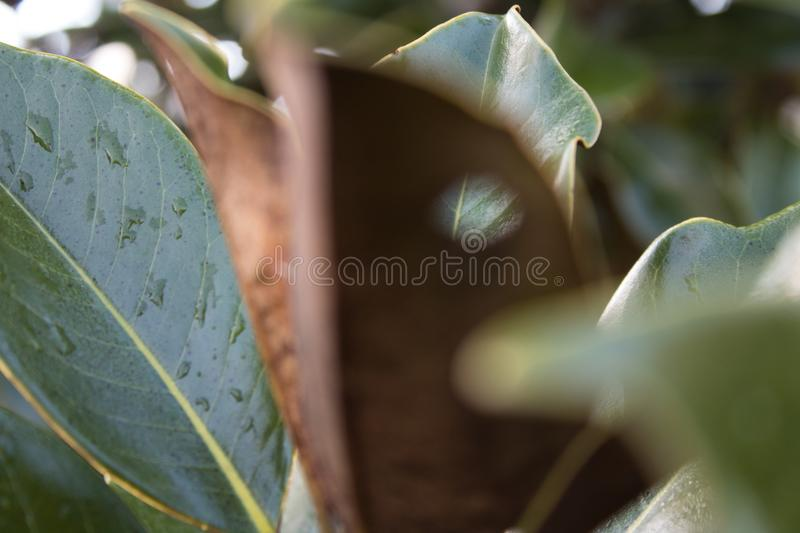 Background leaf in focus. royalty free stock photo