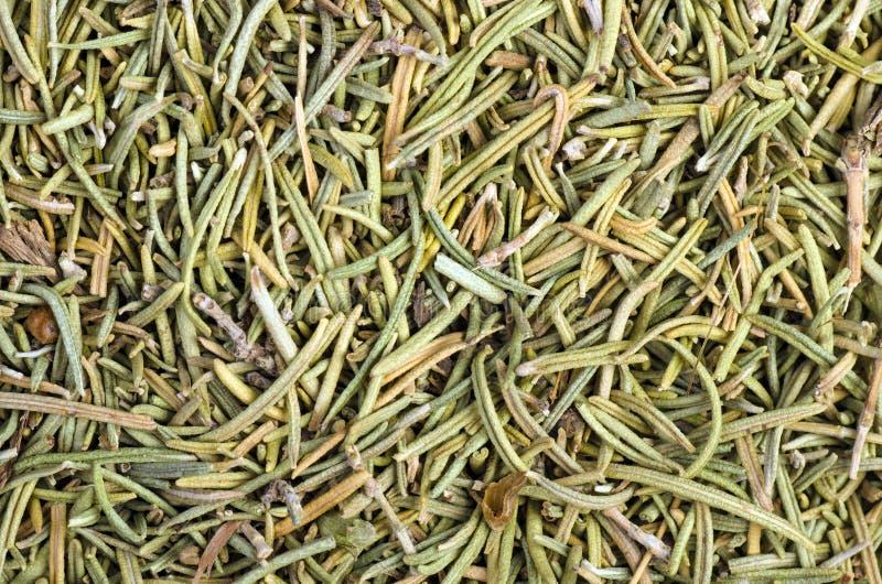 Dried rosemary royalty free stock photo