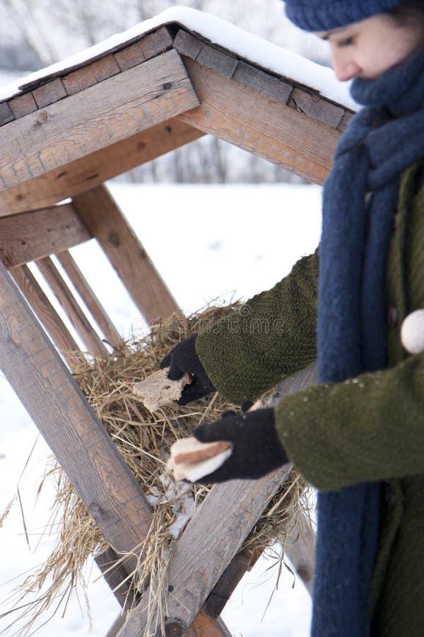 Download Fodder rack stock photo. Image of game, bread, rack, animal - 17618028