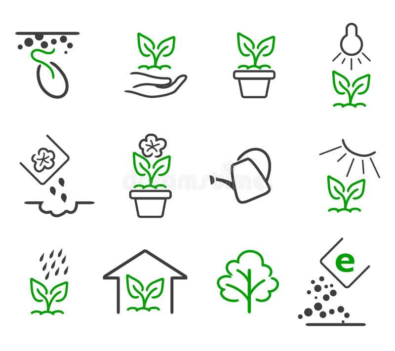 Fodra grodden, och ställer växande vektorsymboler in för växt royaltyfri illustrationer