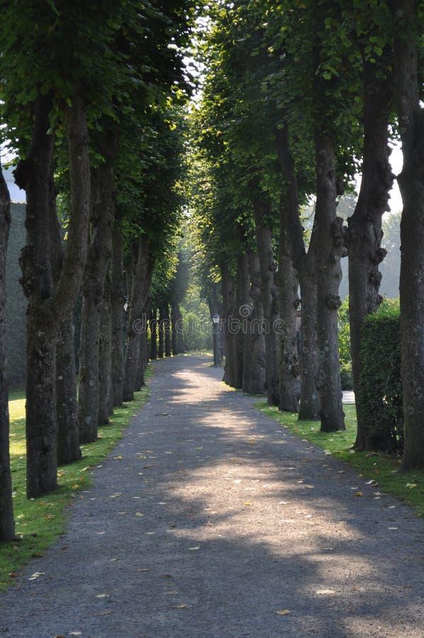 Fodrad bana för Lit träd royaltyfria foton