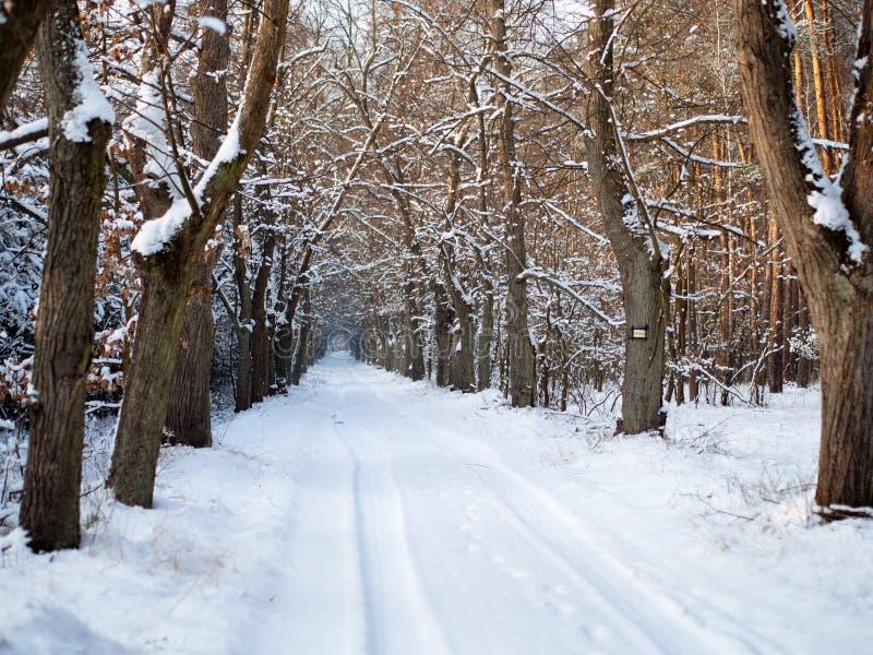 Fodrad gränd för vinter träd fotografering för bildbyråer