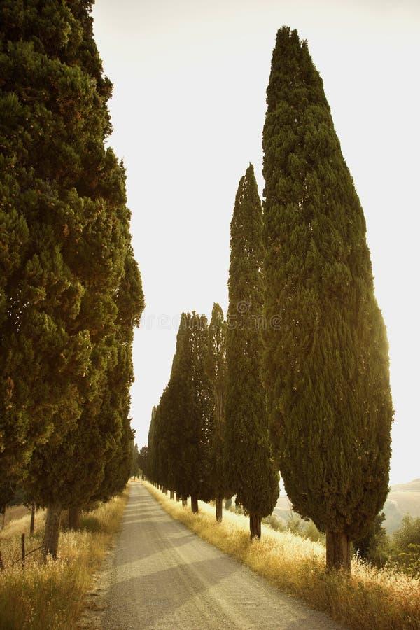 fodrad lantlig tree för väg royaltyfri bild