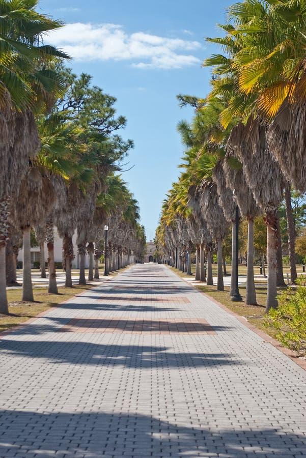 fodrad palmträdwalkway arkivbild
