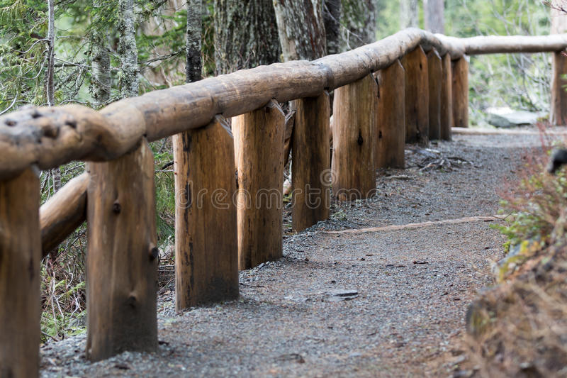 Fodrad slinga för Mt som mer regnig träd är kal av insnöad vinter royaltyfri fotografi