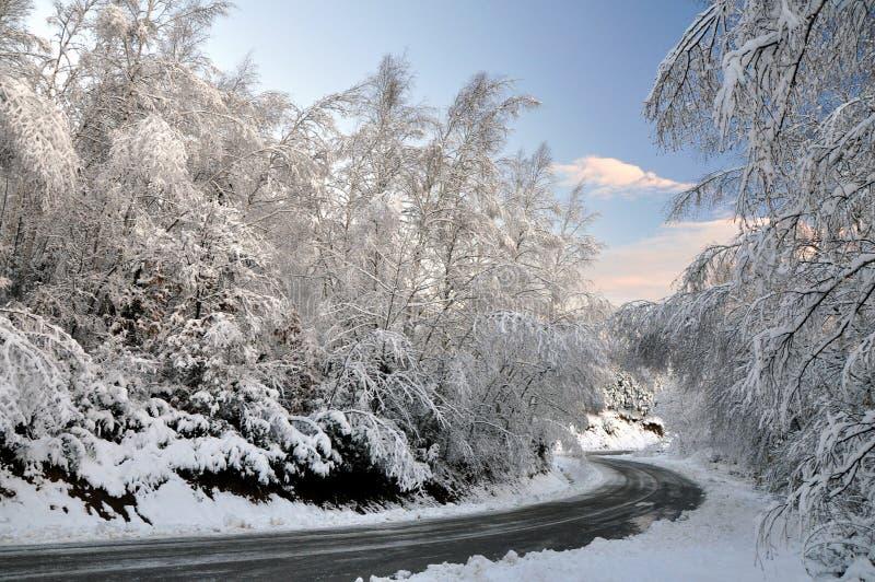 fodrad vinter för vägsnowtree arkivbilder