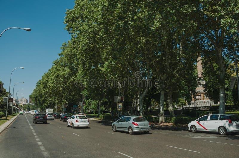 Fodrade lövrika träd på stor upptagen aveny mycket av bilar i Madrid arkivfoto