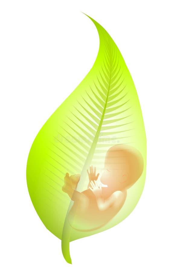 Foetus in Groen Blad royalty-vrije illustratie