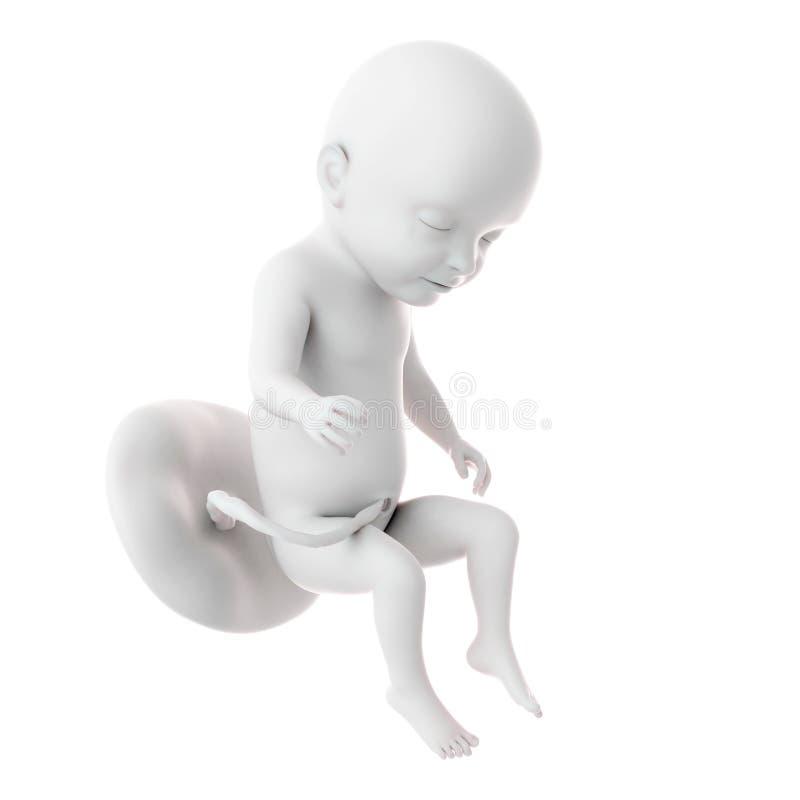 Foetusweek 31 royalty-vrije illustratie