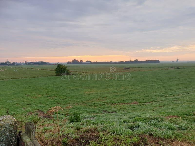 Fog över ängarna under soluppgången i Zuidplaspolder i Zevenhuizen Nederländerna arkivbilder