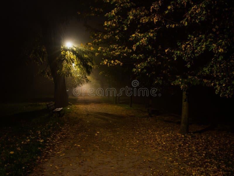 Fog в парке, ноче, мягком фокусе, высоком iso стоковое фото