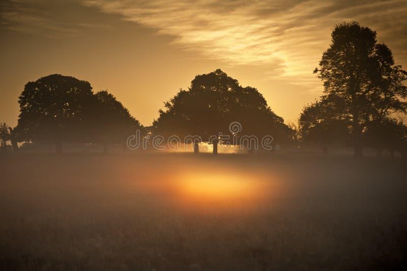 Fog накалять в ярких лучах восхода солнца в ландшафте стоковые фото