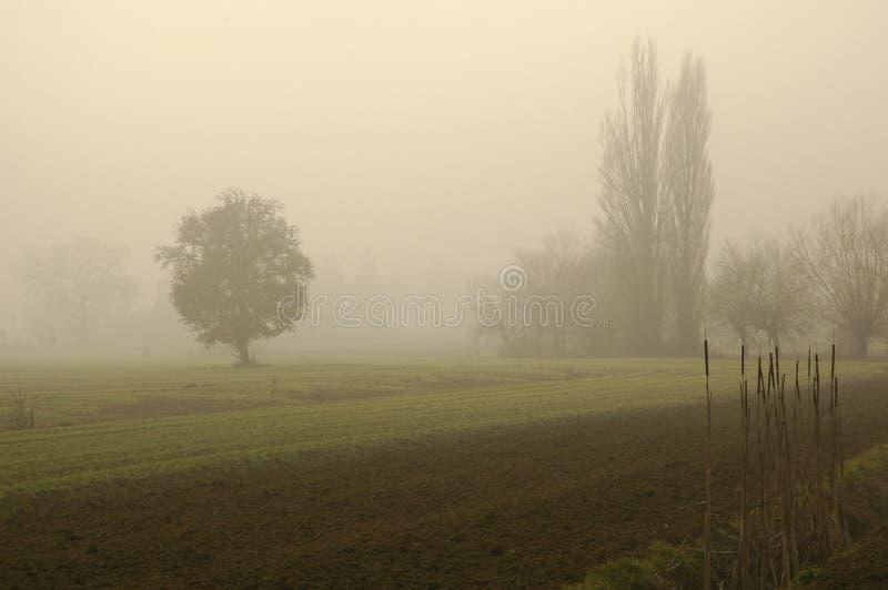 Fog 01 stock image