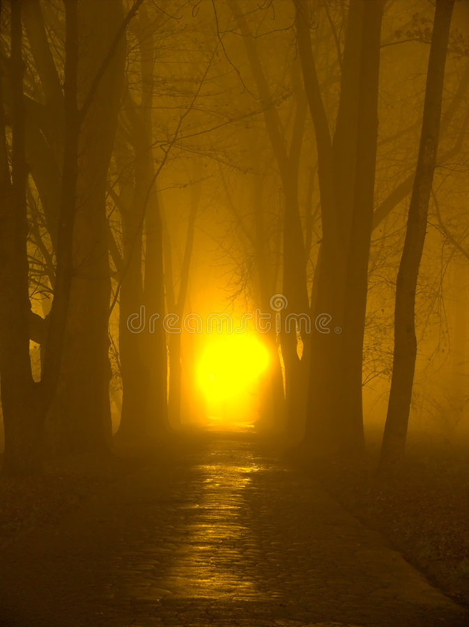 The fog royalty free stock images