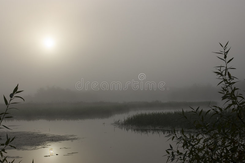 Fog. Morning on the foggy river. The river in Belarus royalty free stock photos