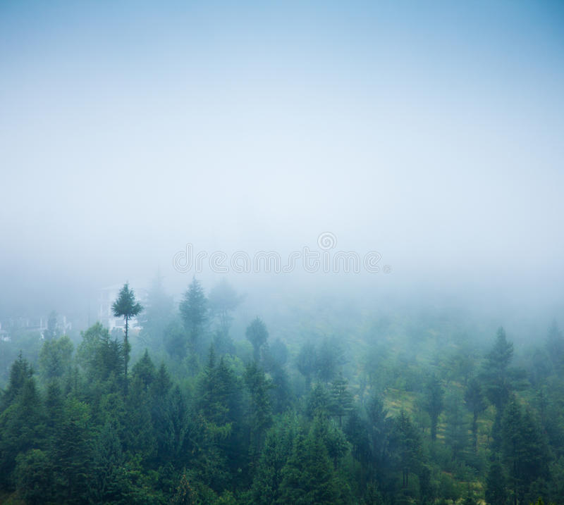 Download Fog stock photo. Image of scenic, greenery, plant, tree - 26181836