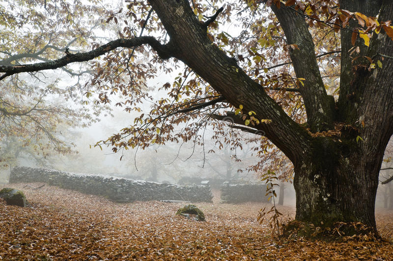 Download Fog stock image. Image of outdoors, botanical, autumnal - 26506423