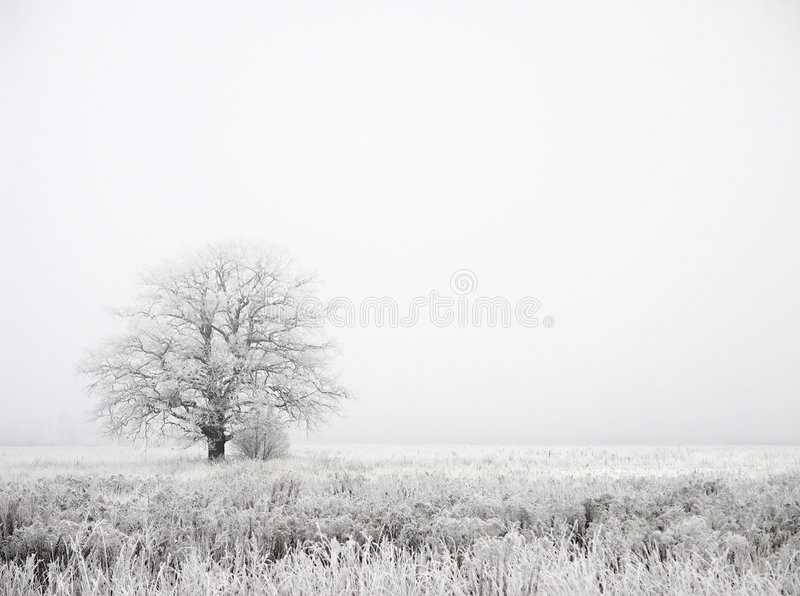 Download Fog stock photo. Image of pure, cold, field, alone, oriental - 456136