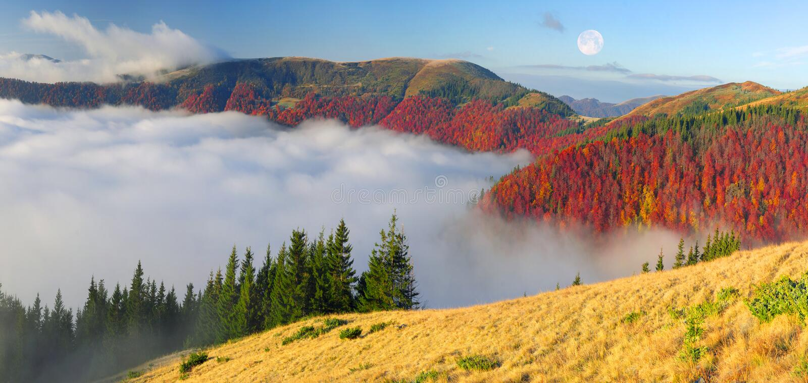 Fog in the autumn. In the Carpathians, golden autumn cold often turns into snow then again come warm sunny days. Against the background of high mountain ranges royalty free stock images