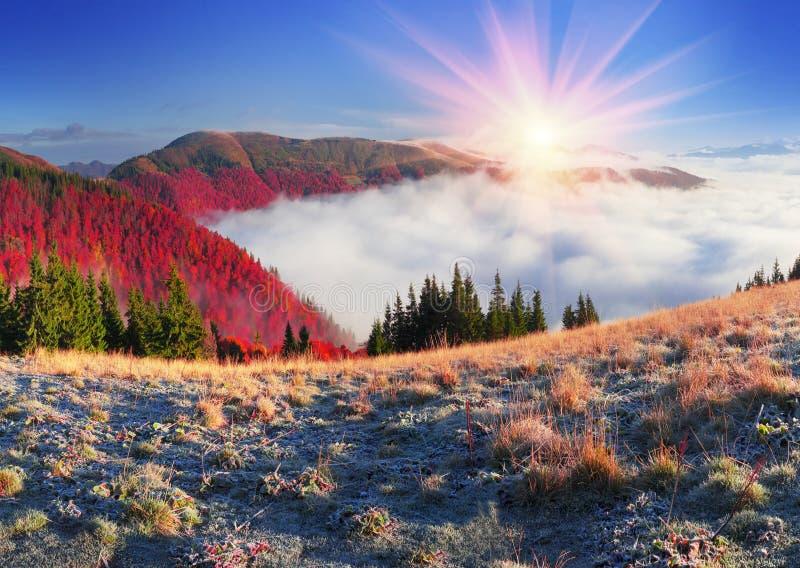 Fog in the autumn stock photos