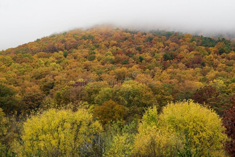 Autumn Foliage on the Roanoke Mountain royalty free stock photography