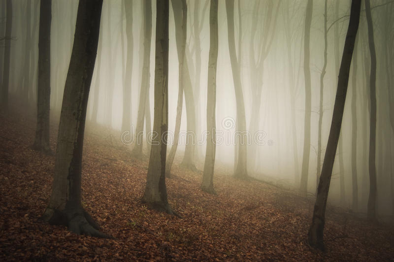Fog in a beautiful forest with fog in autumn after rain