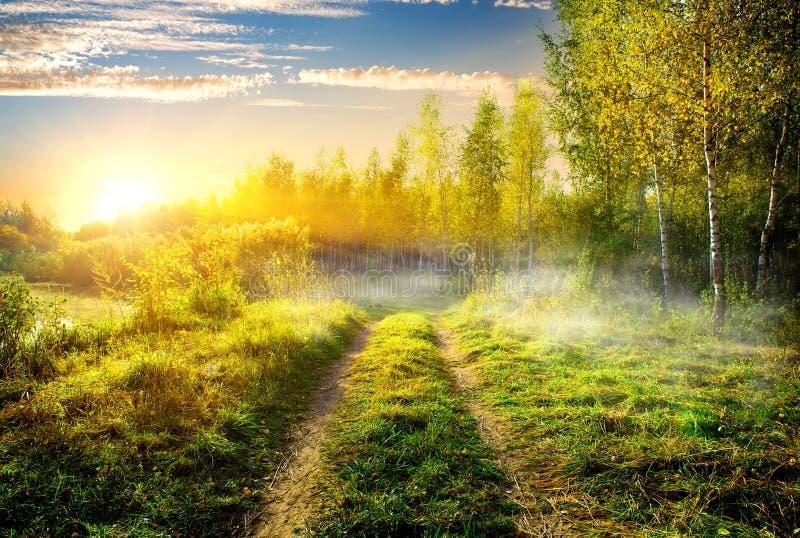 Fog in birch grove. Fog over country road in birch grove stock photo