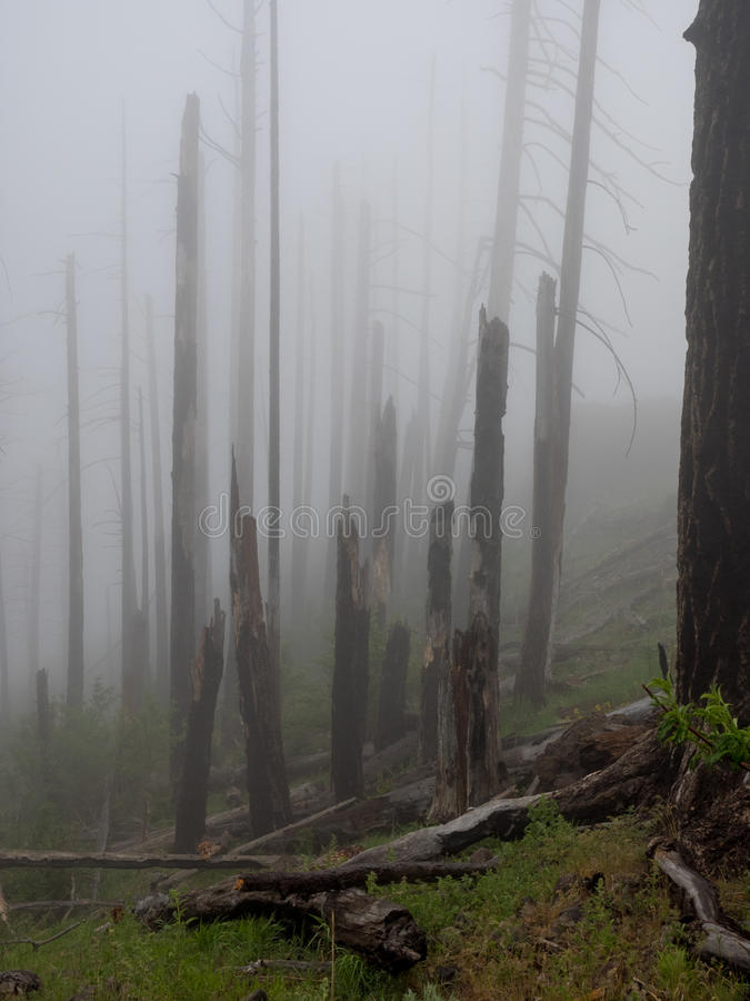 Fog in a burnt forest royalty free stock images