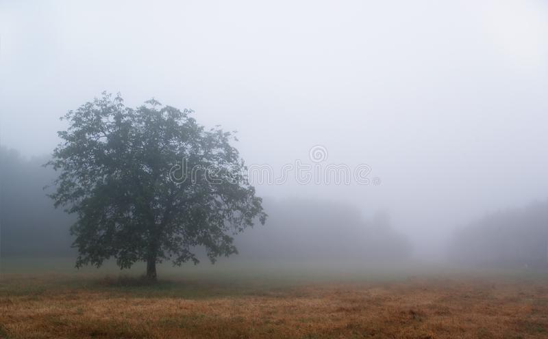 Fog in chianti royalty free stock image