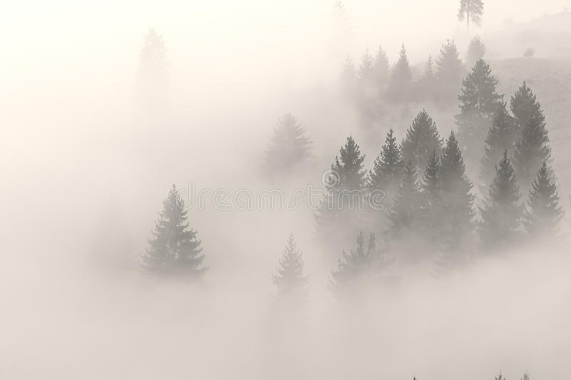 Fog is climbing on the hill befor the sunrise stock photography