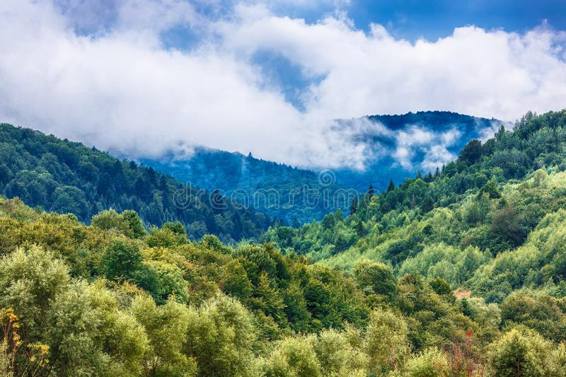 Fog clouds at the pine tree mystical woods, morning. Beautiful foggy mystic mountains. Fog clouds at the pine tree mystical woods, morning. Carpathian region stock images