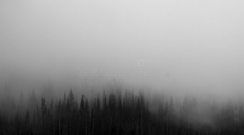 Fog Covering Forest Free Public Domain Cc0 Image