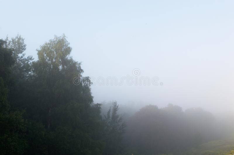 Fog covering trees. In the morning with blue sky, natural blur royalty free stock images