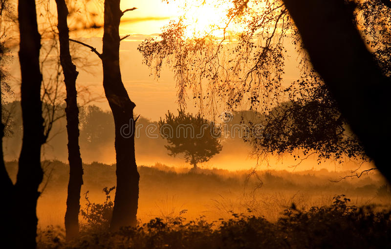 Fog at dawn in the forest stock images