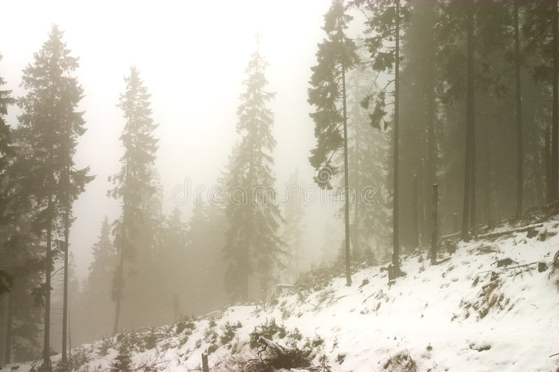 Download Fog dream stock image. Image of wood, detail, snow, power - 1747597