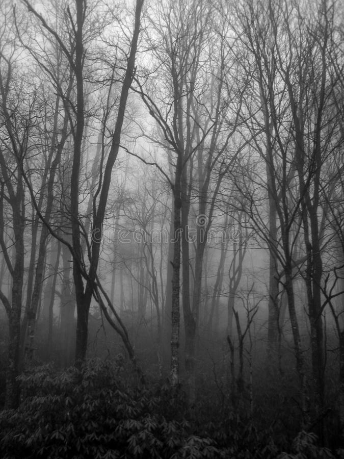 Fog Envelopes Trees in the Forest royalty free stock photo