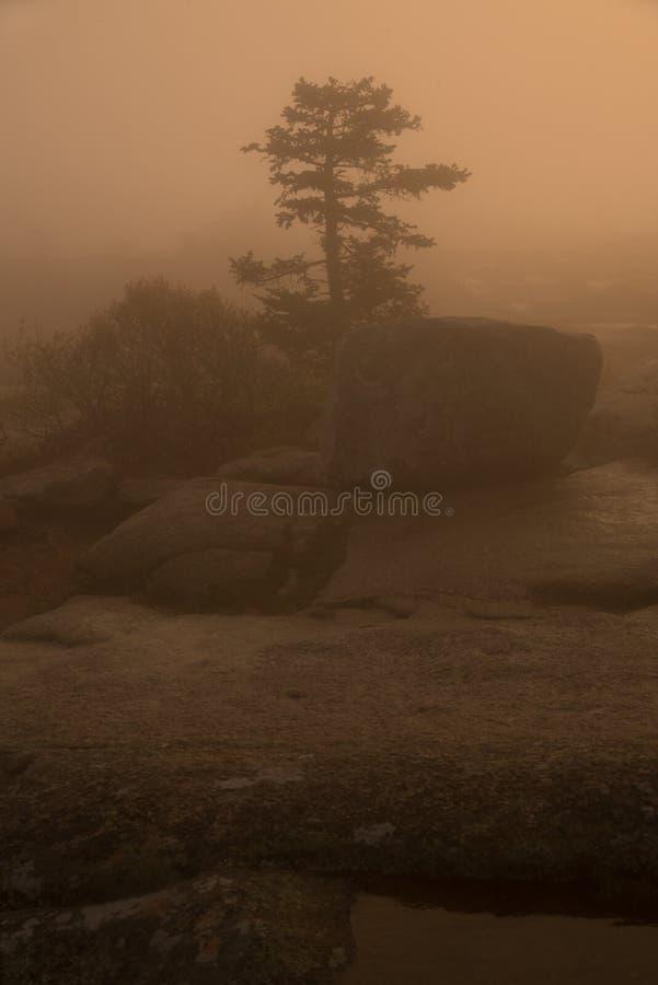 Foggy sunrise on cadillac mountain royalty free stock image