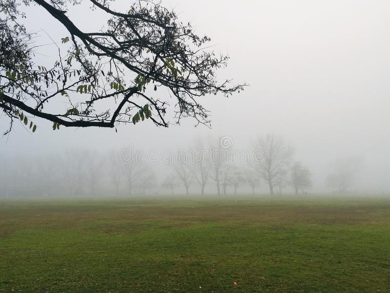 Fog in the fields royalty free stock photos