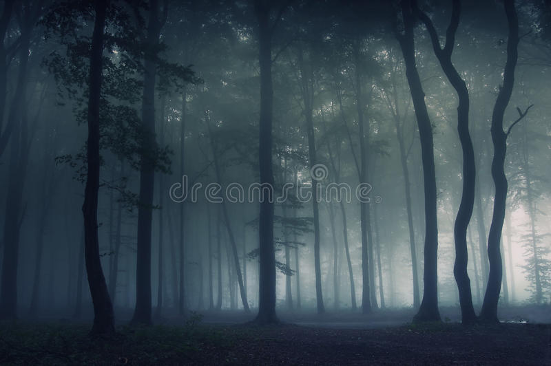 Download Fog in the forest stock image. Image of monochrome, landscape - 10524465