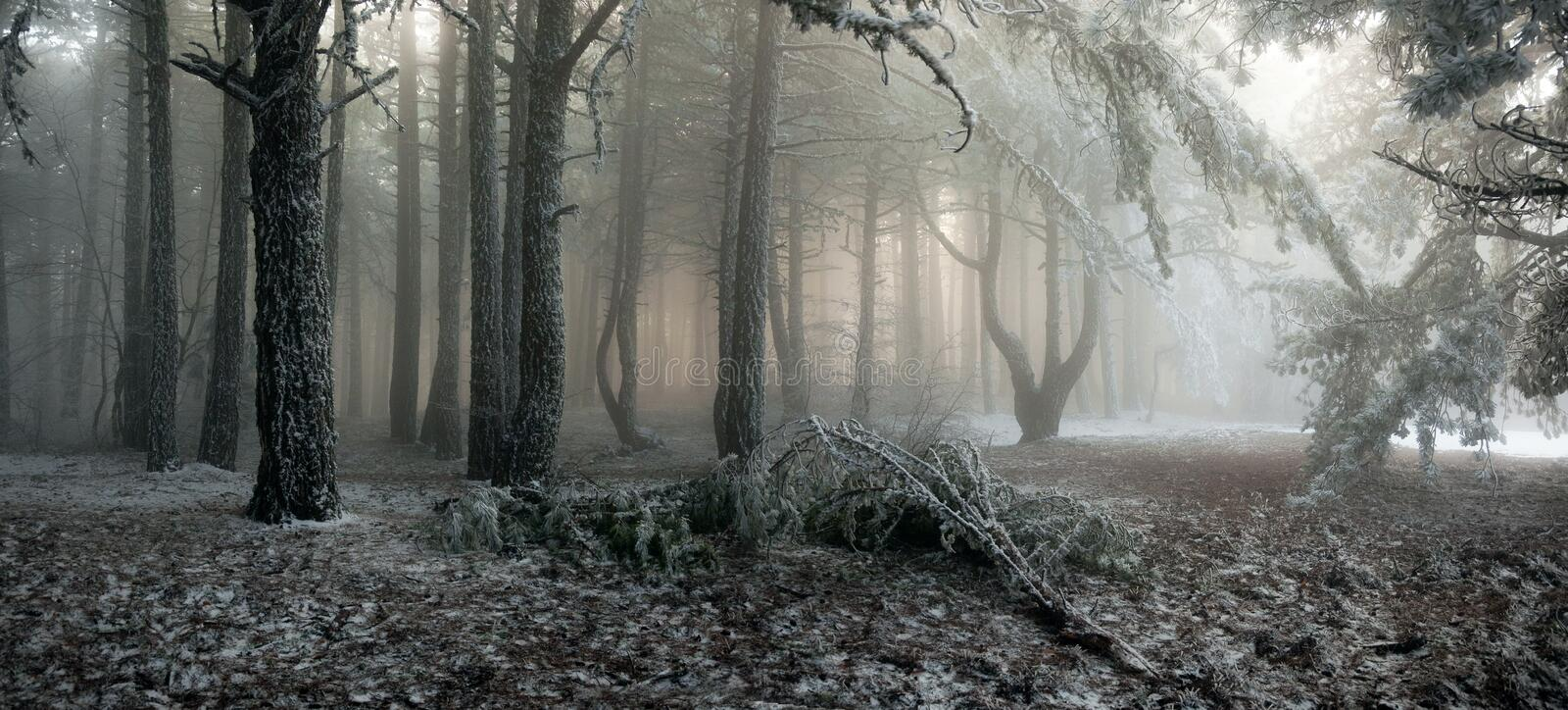 Fog in the forest royalty free stock photos
