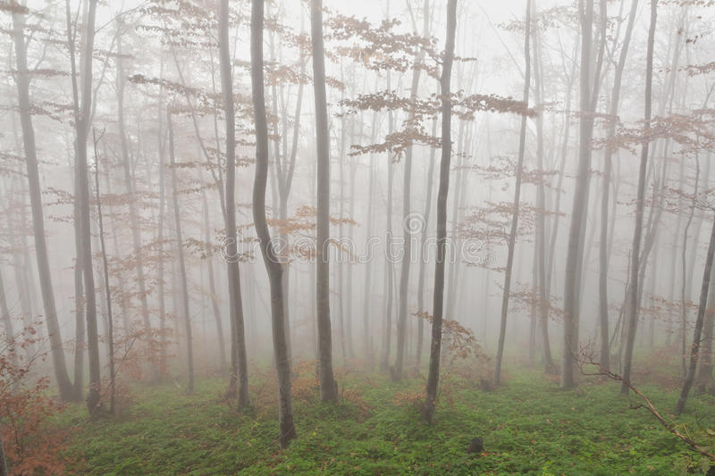 Download Fog in the forest stock photo. Image of backgrounds, dark - 22655736