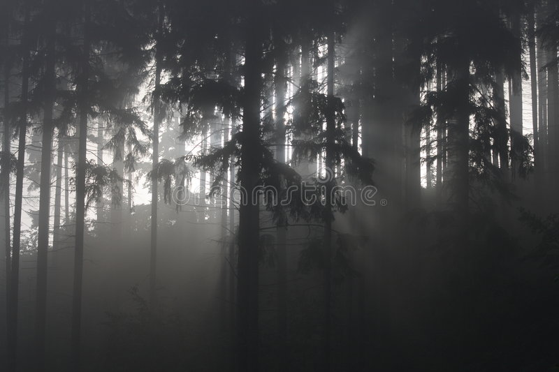 Download Fog in forest stock photo. Image of hope, chilly, moisture - 2640858