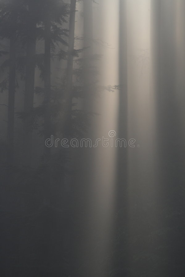 Download Fog in forest stock photo. Image of humidity, wood, break - 2640904