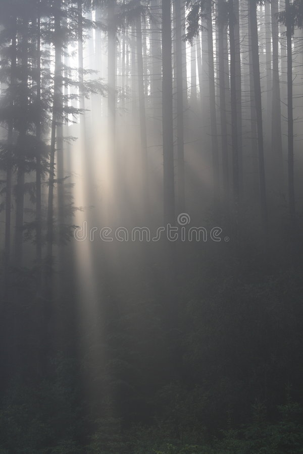 Download Fog in forest stock photo. Image of moisture, hopeful - 2640920