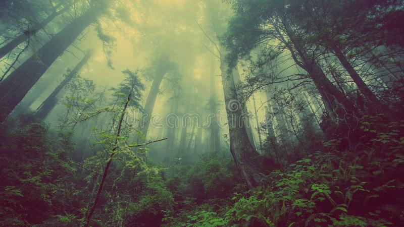Fog In Forest Free Public Domain Cc0 Image