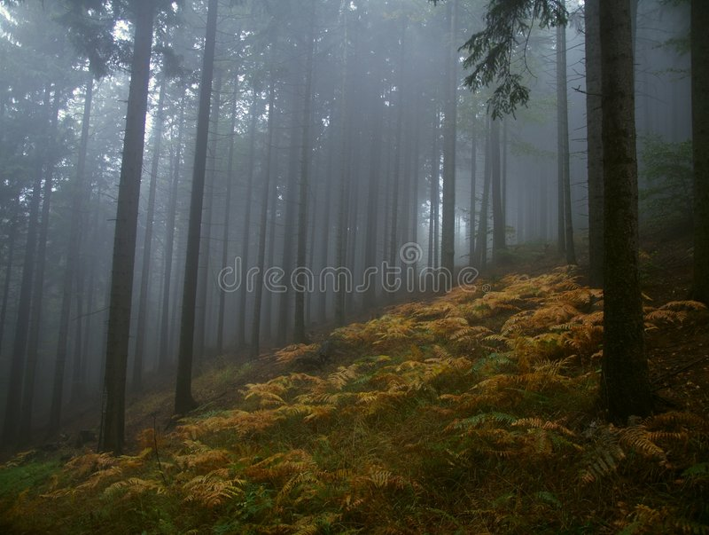 Download Fog in forest stock photo. Image of horizontal, fern, hiking - 8638798